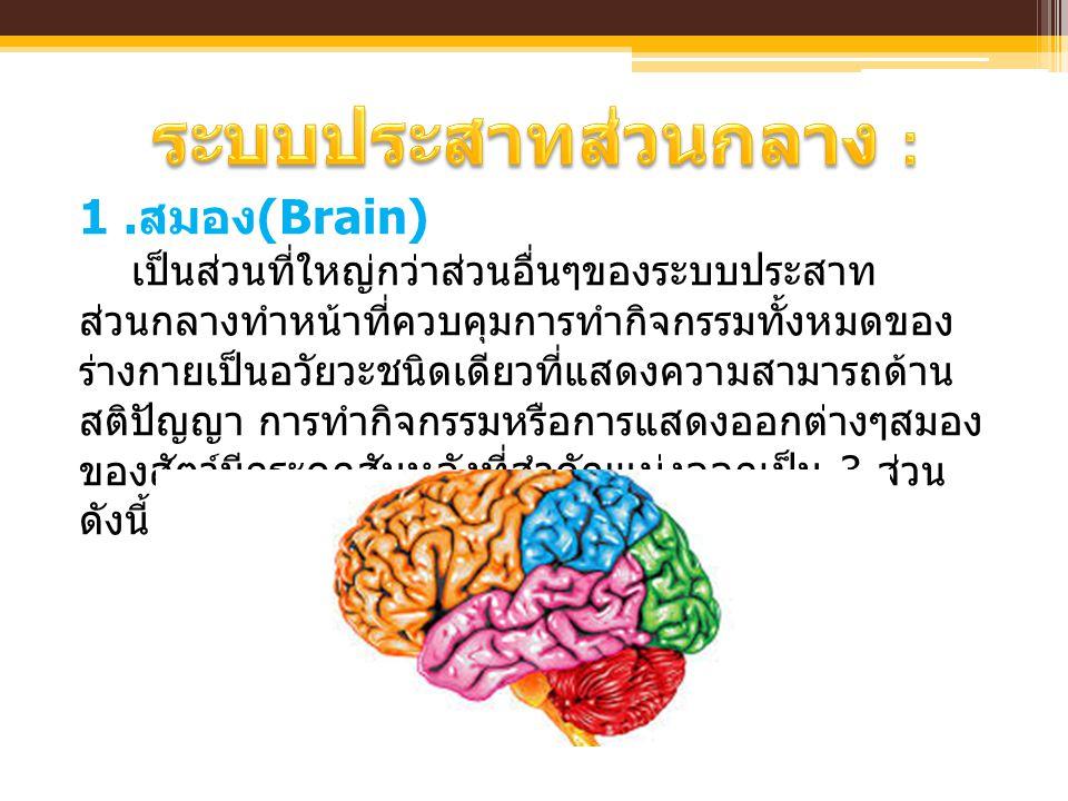 ระบบประสาทส่วนกลาง :
