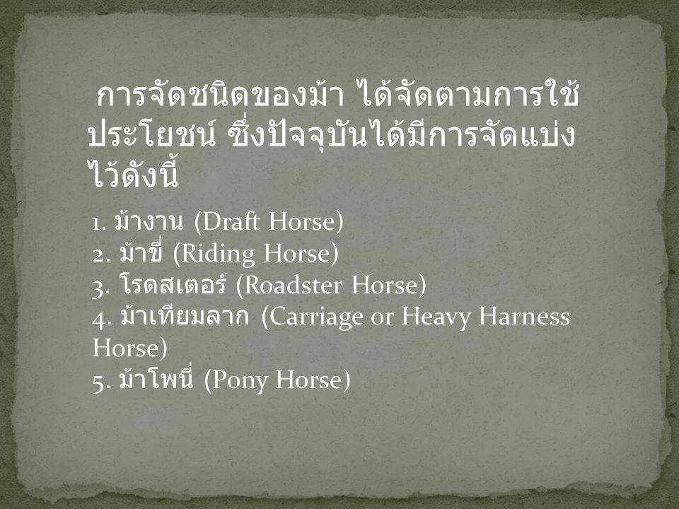 การจัดชนิดของม้า ได้จัดตามการใช้ประโยชน์ ซึ่งปัจจุบันได้มีการจัดแบ่งไว้ดังนี้