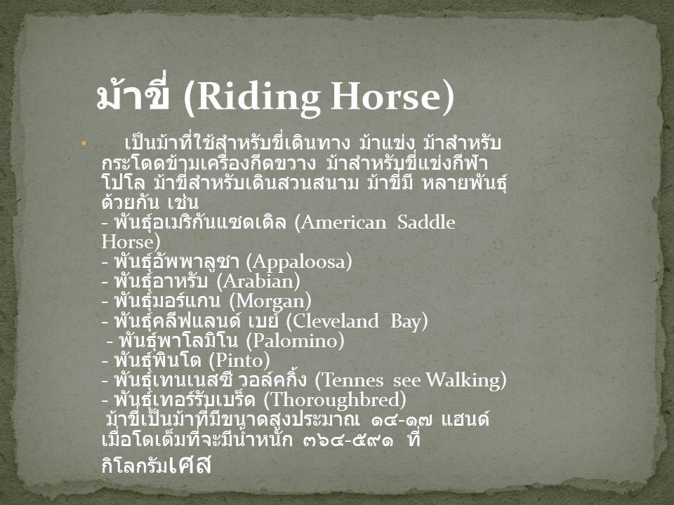 ม้าขี่ (Riding Horse)