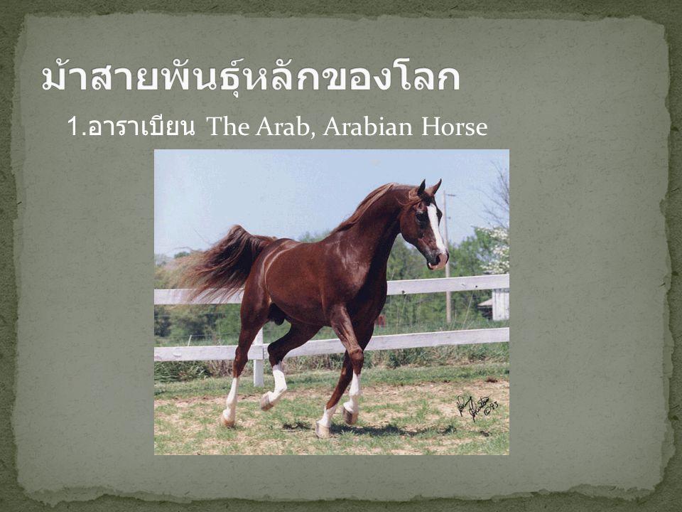 ม้าสายพันธุ์หลักของโลก