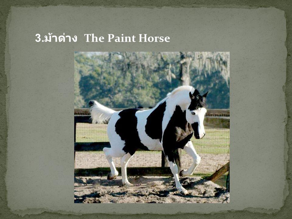 3.ม้าด่าง The Paint Horse