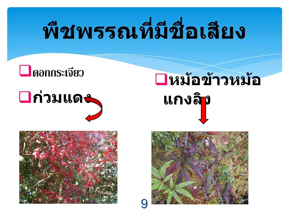 พืชพรรณที่มีชื่อเสียง