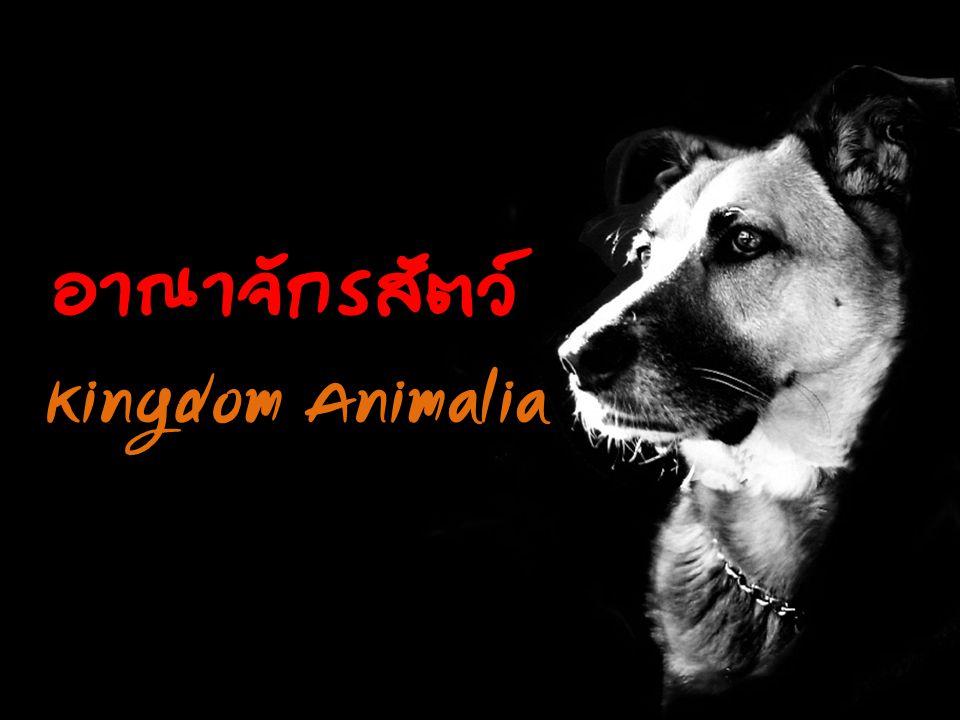 อาณาจักรสัตว์ Kingdom Animalia