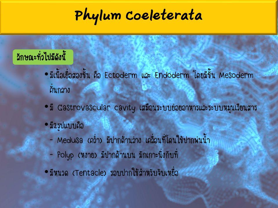Phylum Coeleterata ลักษณะทั่วไปมีดังนี้