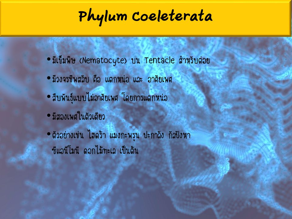 Phylum Coeleterata มีเข็มพิษ (Nematocyte) บน Tentacle สำหรับต่อย