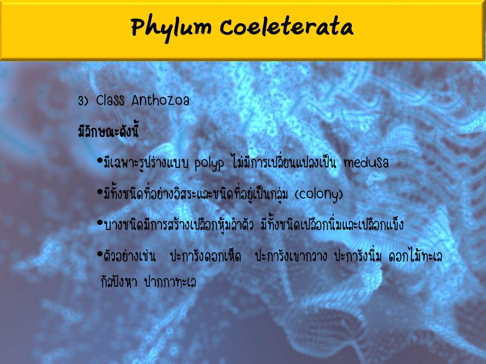 Phylum Coeleterata 3) Class Anthozoa มีลักษณะดังนี้