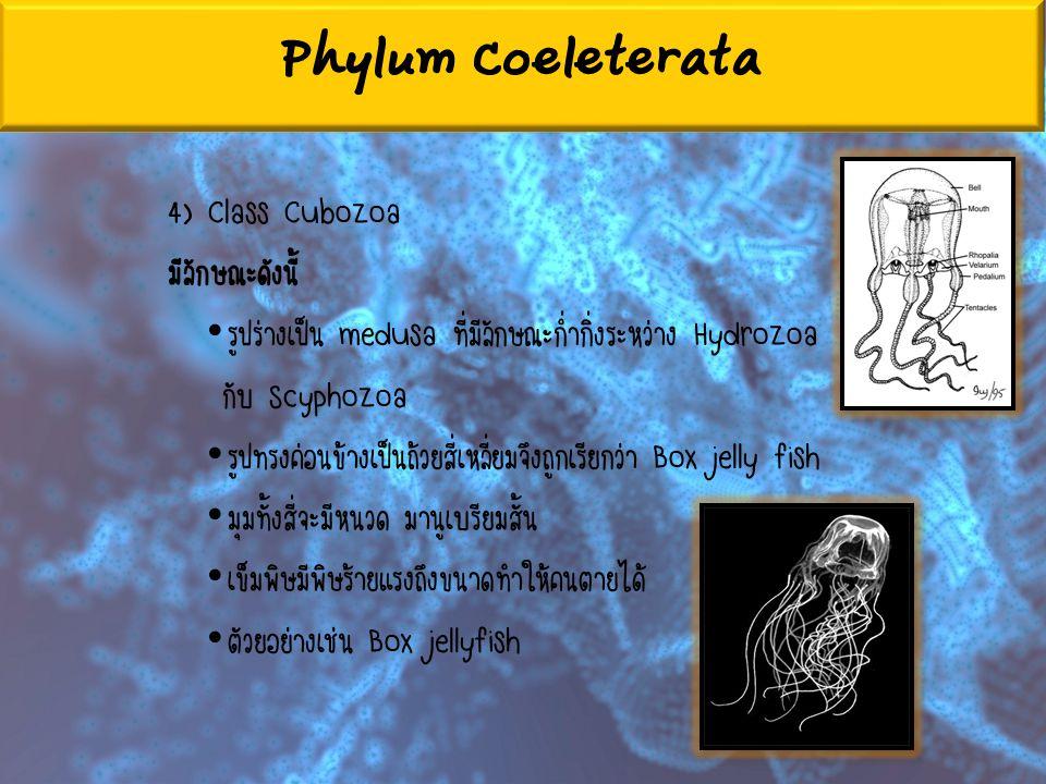 Phylum Coeleterata 4) Class Cubozoa มีลักษณะดังนี้