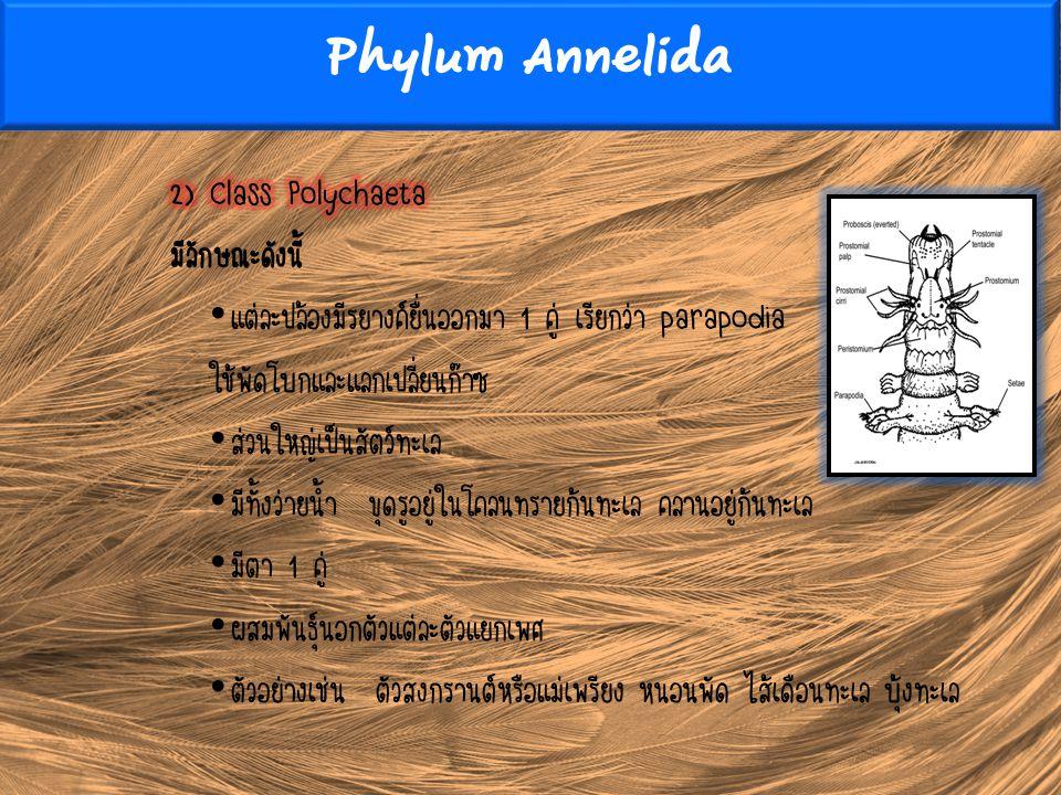 Phylum Annelida 2) Class Polychaeta มีลักษณะดังนี้