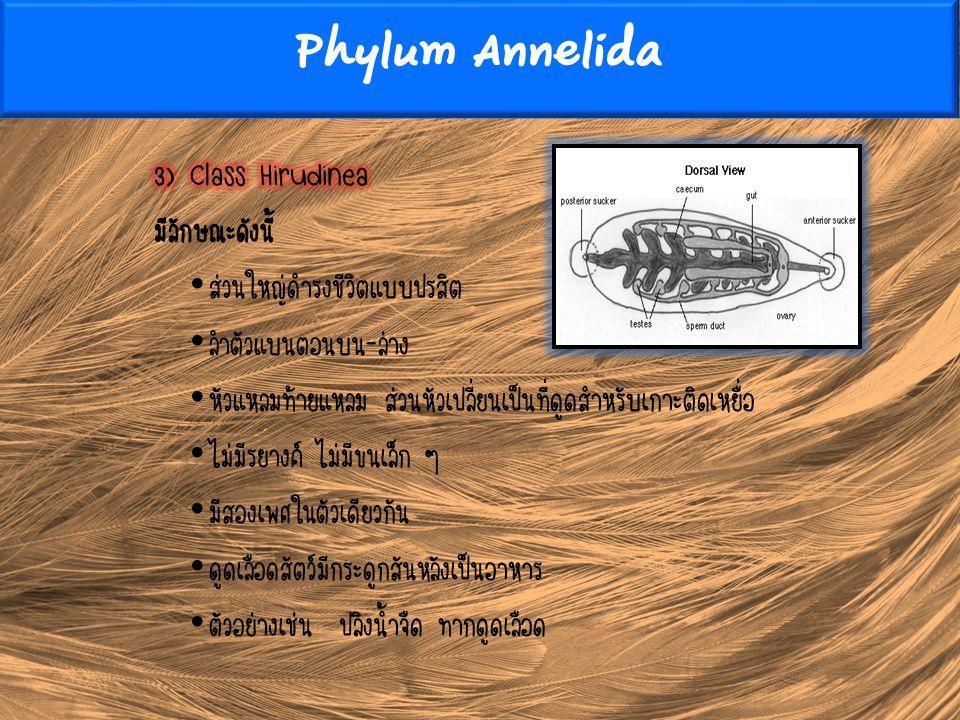Phylum Annelida 3) Class Hirudinea มีลักษณะดังนี้