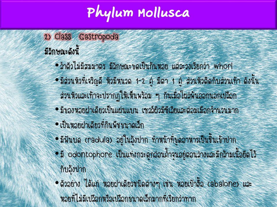 Phylum Mollusca 2) Class Gastropoda มีลักษณะดังนี้