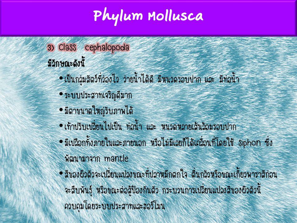 Phylum Mollusca 3) Class cephalopoda มีลักษณะดังนี้