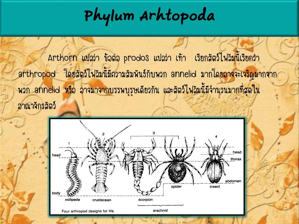 Phylum Arhtopoda