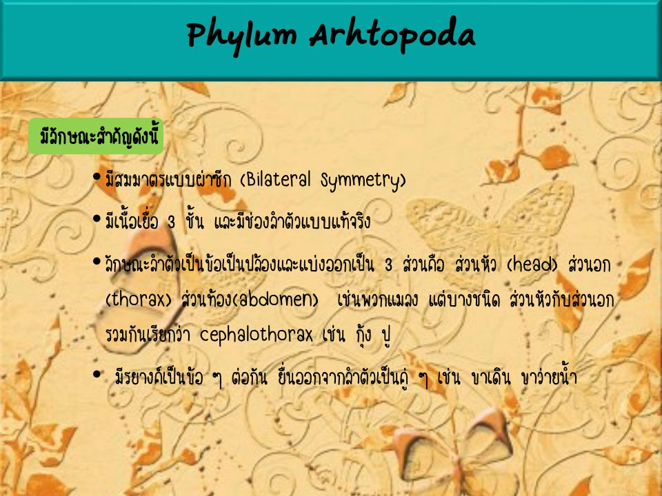 Phylum Arhtopoda มีลักษณะสำคัญดังนี้
