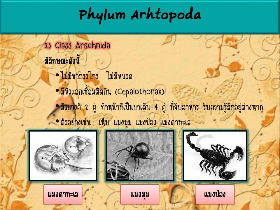 Phylum Arhtopoda 2) Class Arachnida มีลักษณะดังนี้