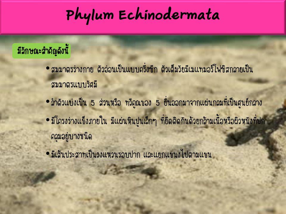 Phylum Echinodermata มีลักษณะสำคัญดังนี้