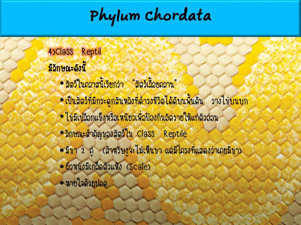 Phylum Chordata 4)Class Reptil มีลักษณะดังนี้