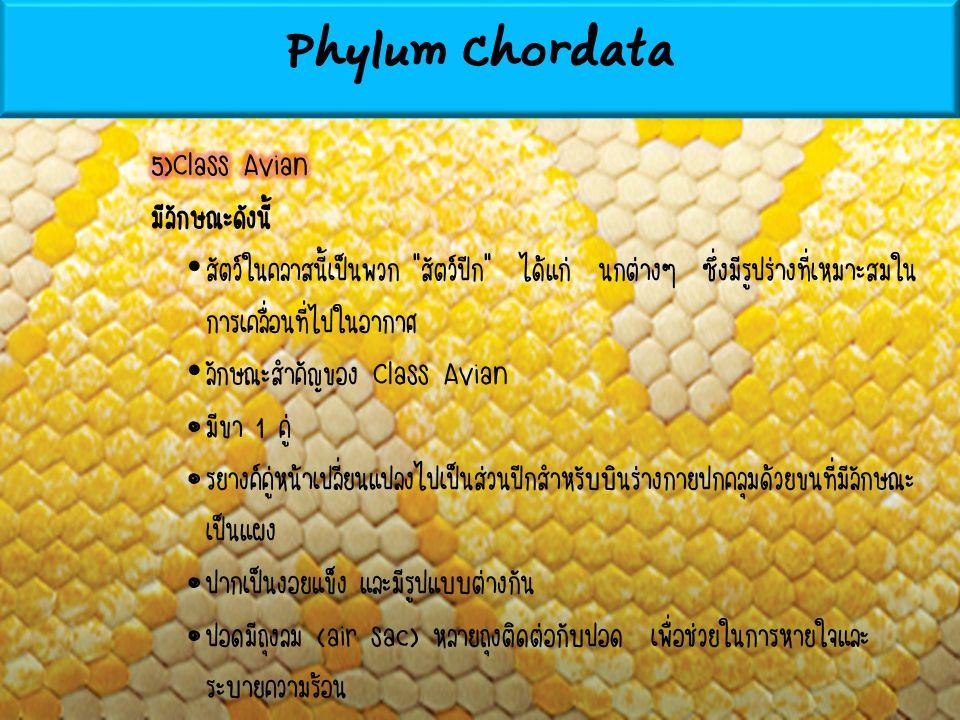 Phylum Chordata 5)Class Avian มีลักษณะดังนี้