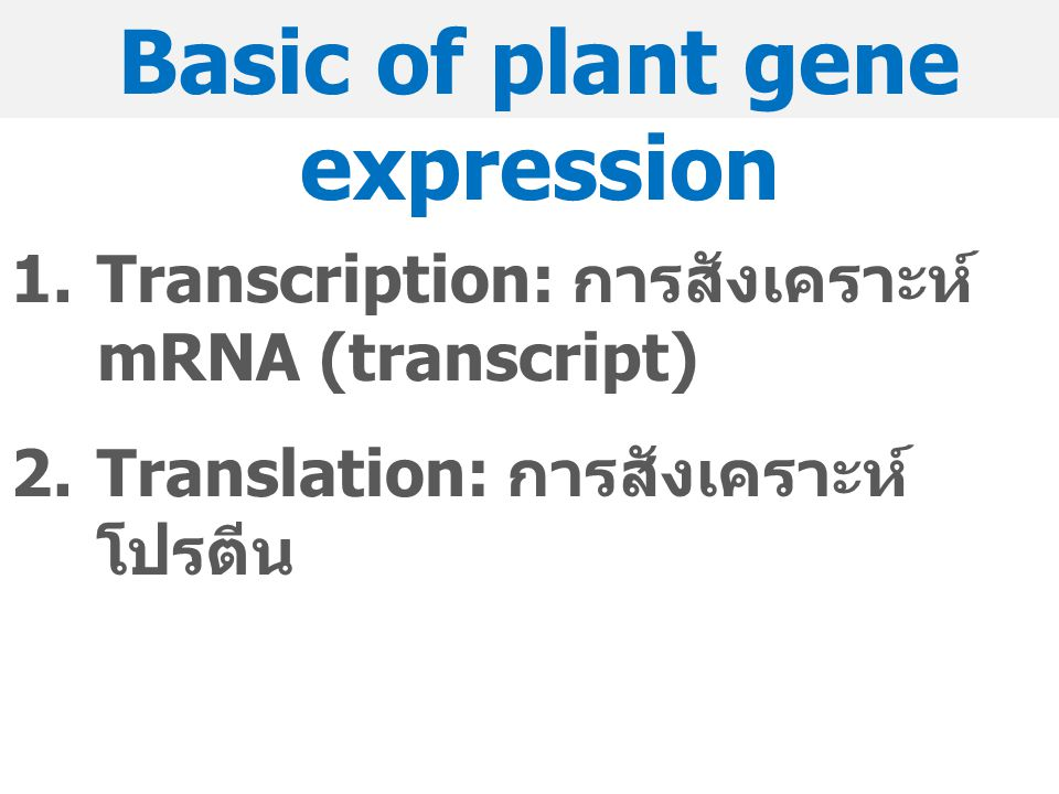 Basic of plant gene expression