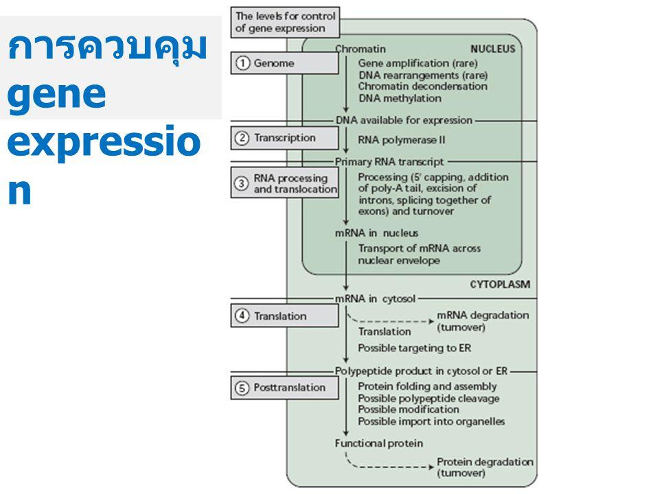 การควบคุม gene expression