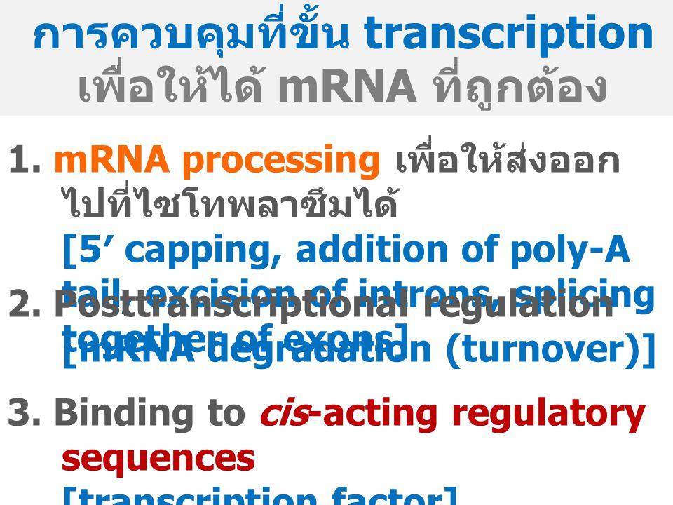 การควบคุมที่ขั้น transcription เพื่อให้ได้ mRNA ที่ถูกต้อง