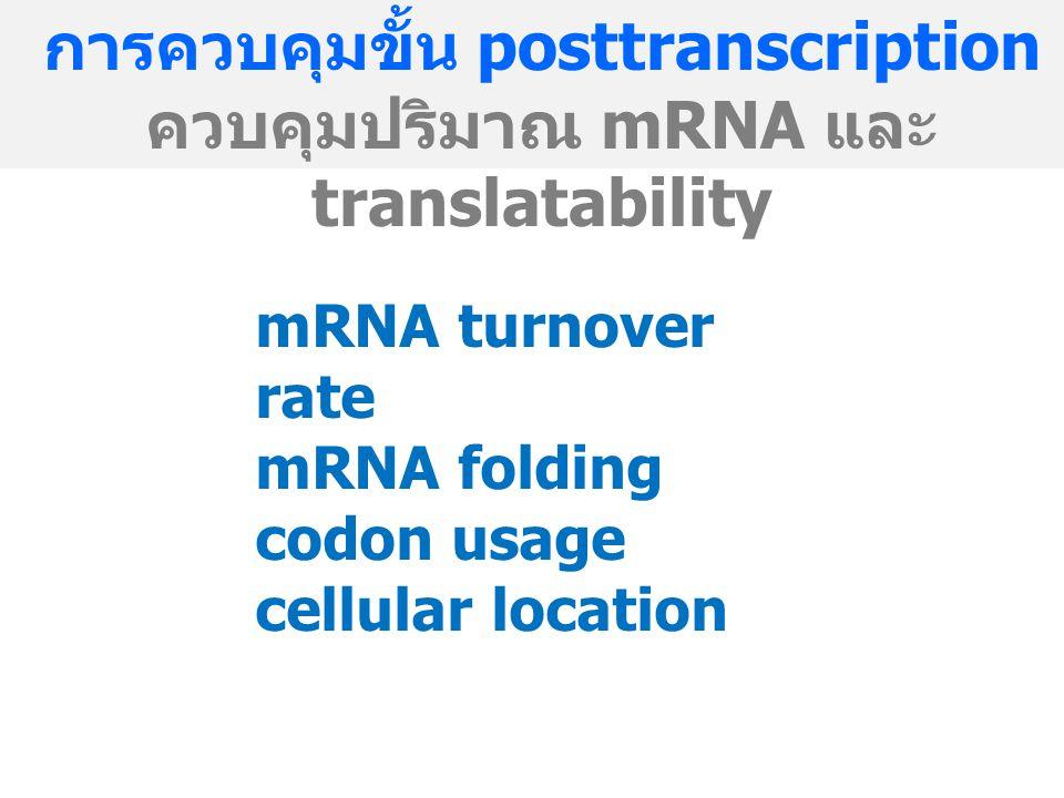 การควบคุมขั้น posttranscription ควบคุมปริมาณ mRNA และ translatability