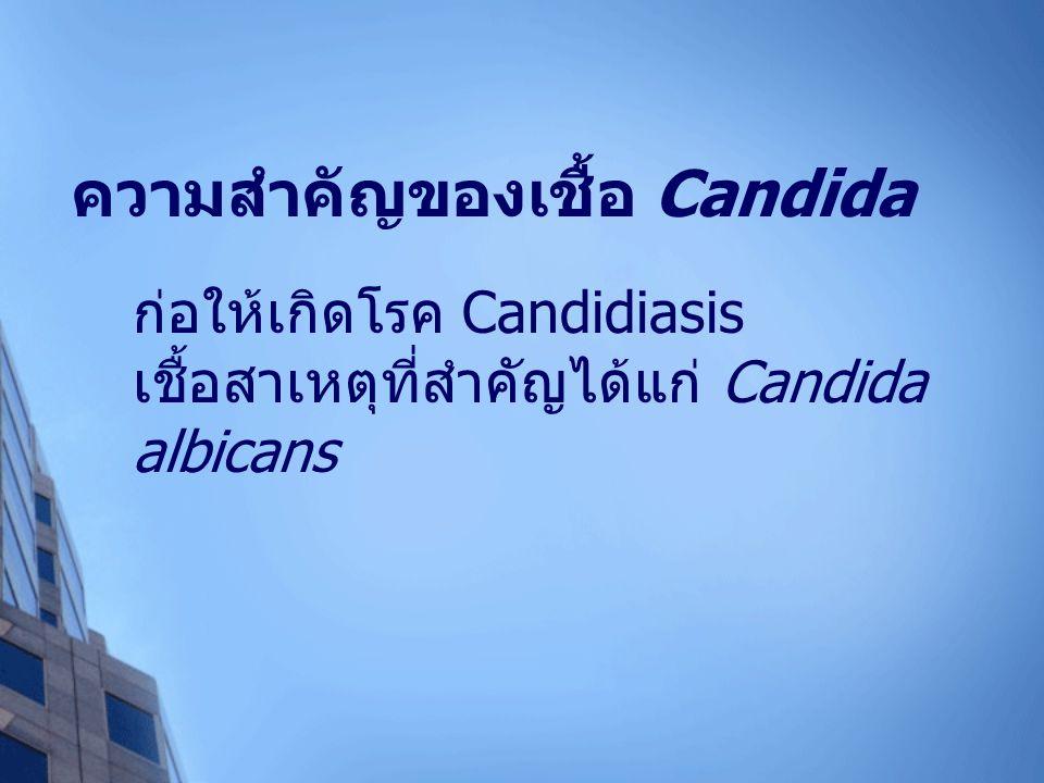 ความสำคัญของเชื้อ Candida