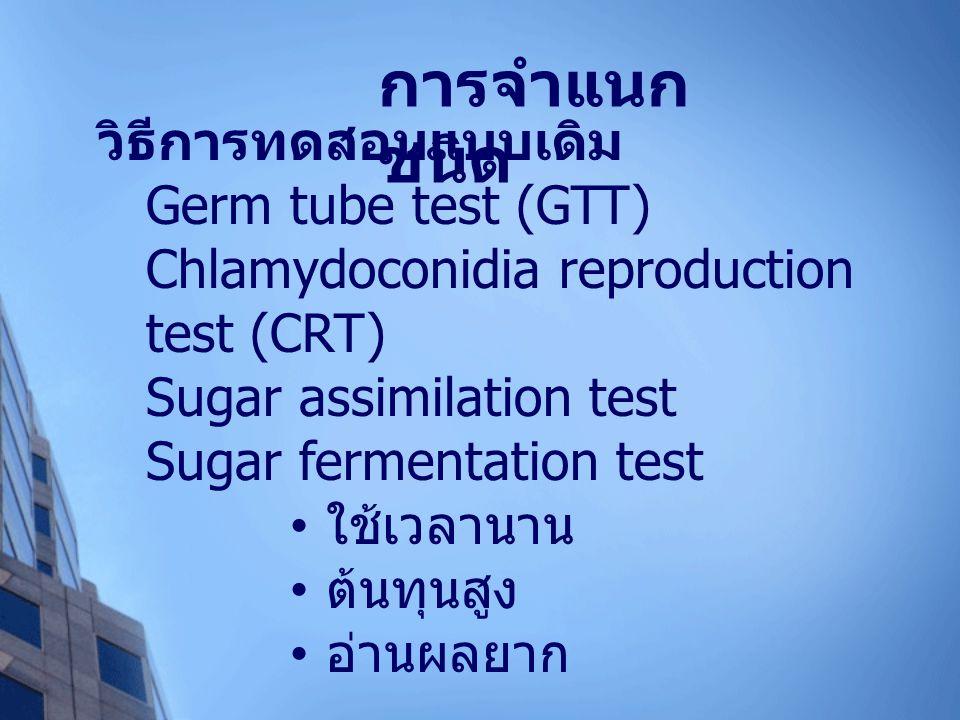 การจำแนกชนิด วิธีการทดสอบแบบเดิม Germ tube test (GTT)