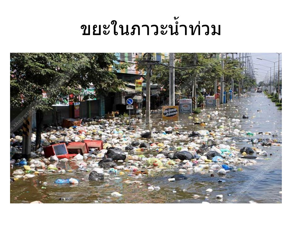 ขยะในภาวะน้ำท่วม