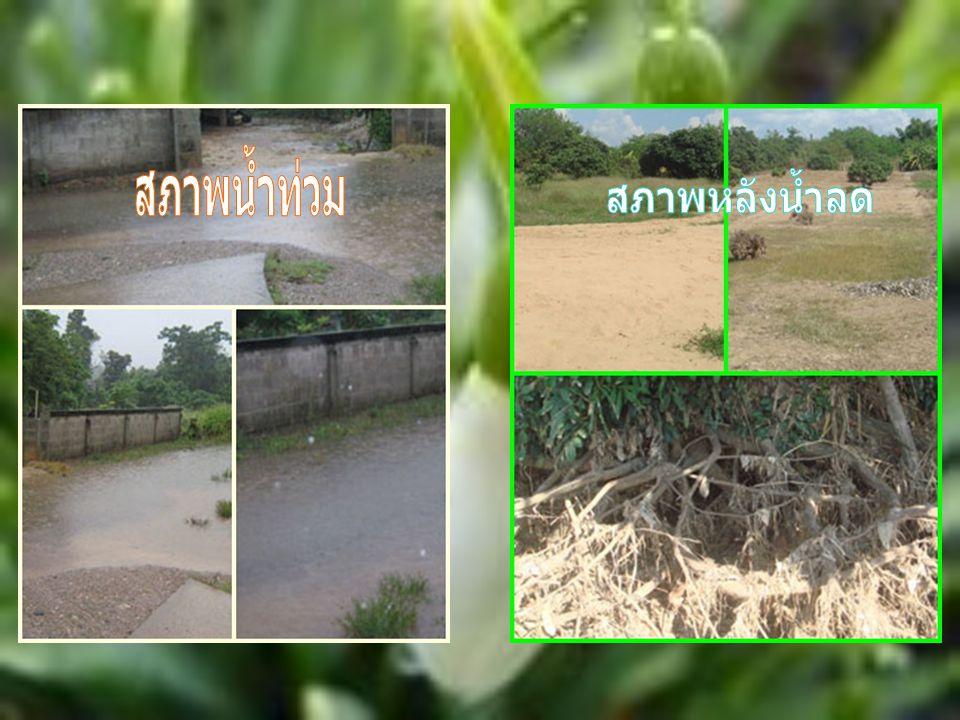 สภาพน้ำท่วม สภาพหลังน้ำลด