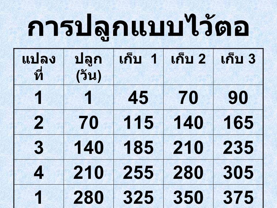 การปลูกแบบไว้ตอ แปลงที่ ปลูก (วัน) เก็บ 1. เก็บ 2. เก็บ 3. 1. 45. 70. 90. 2. 115. 140. 165.