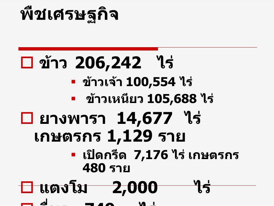 พืชเศรษฐกิจ ข้าว 206,242 ไร่ ยางพารา 14,677 ไร่ เกษตรกร 1,129 ราย