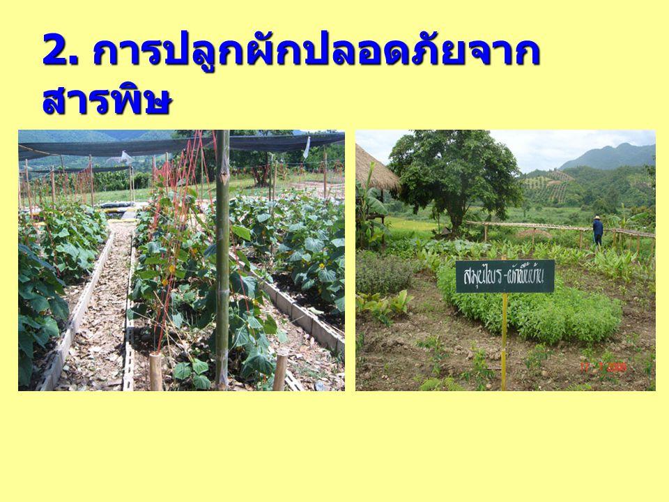 2. การปลูกผักปลอดภัยจากสารพิษ