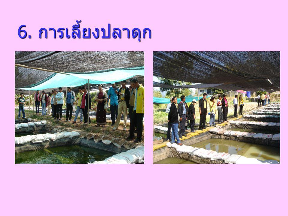 6. การเลี้ยงปลาดุก