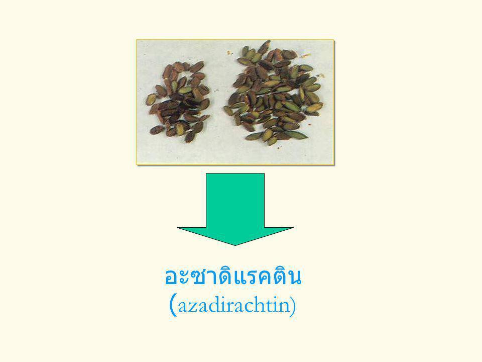 อะซาดิแรคติน (azadirachtin)