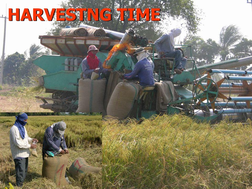HARVESTNG TIME