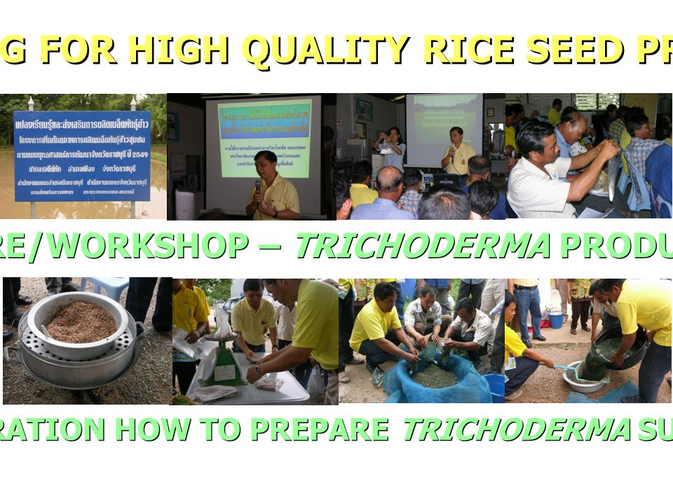 TRAINING FOR HIGH QUALITY RICE SEED PRODUCER