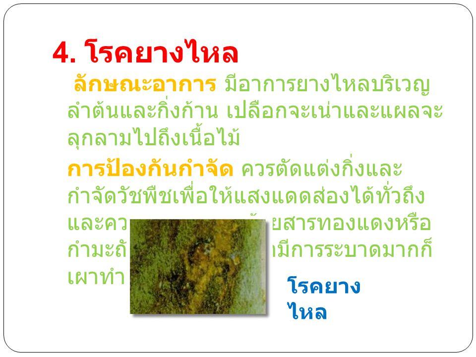4. โรคยางไหล