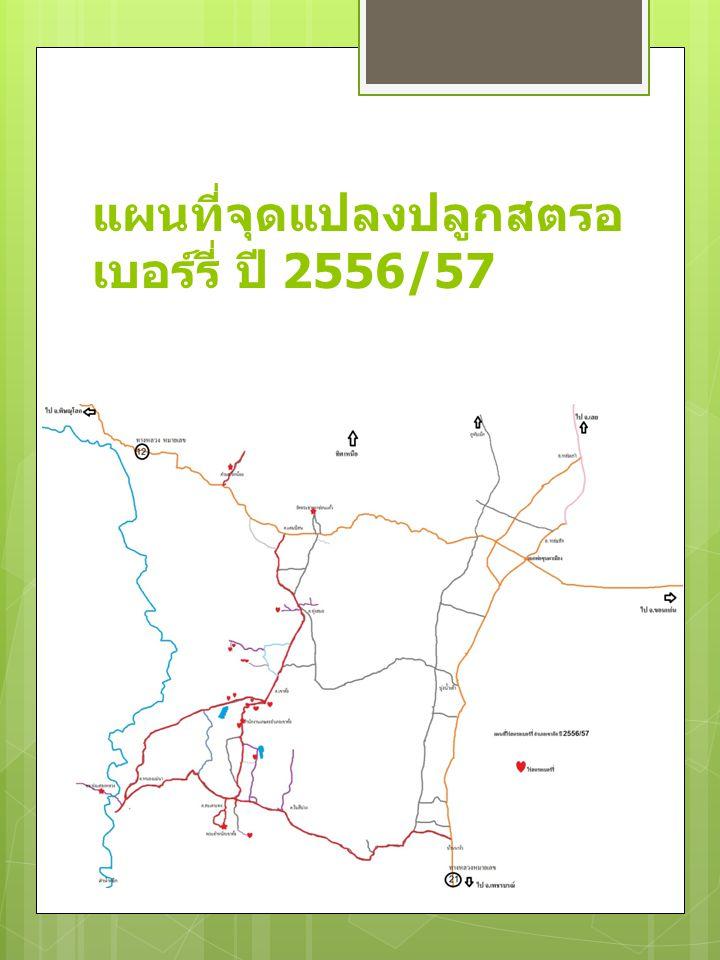 แผนที่จุดแปลงปลูกสตรอเบอร์รี่ ปี 2556/57