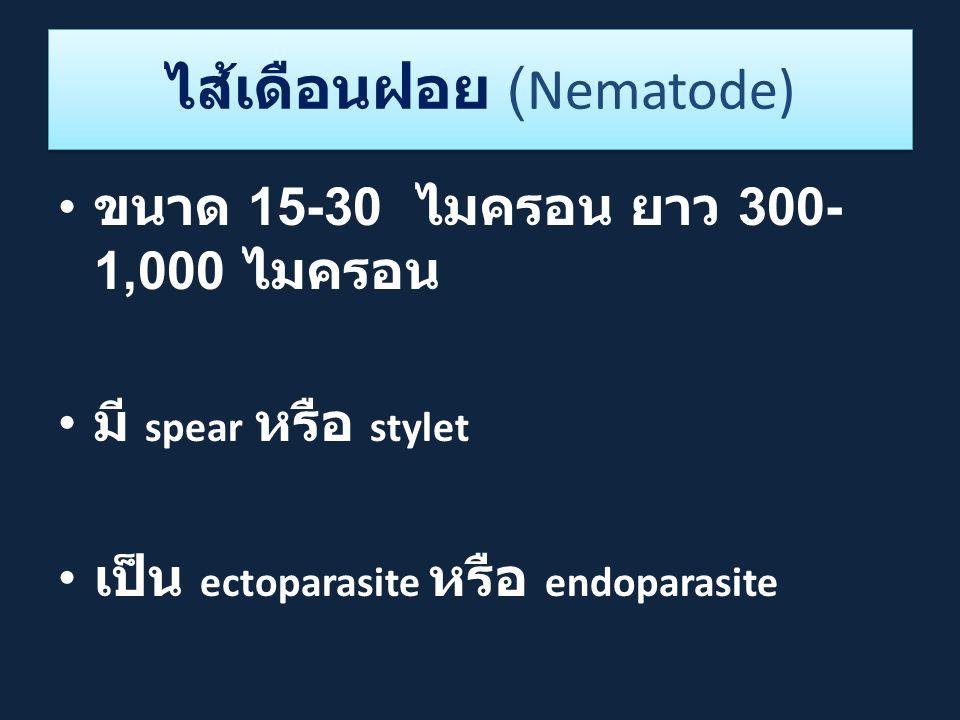 ไส้เดือนฝอย (Nematode)