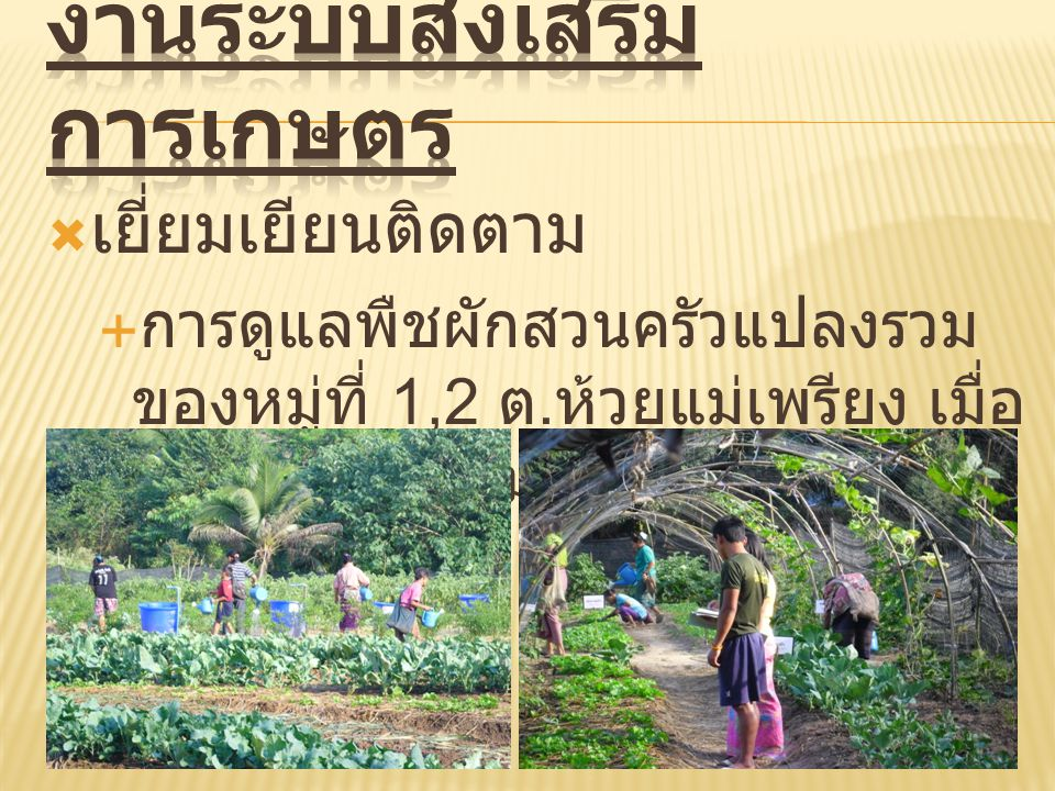 งานระบบส่งเสริมการเกษตร