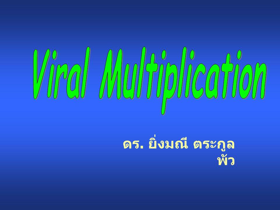 Viral Multiplication ดร. ยิ่งมณี ตระกูลพัว