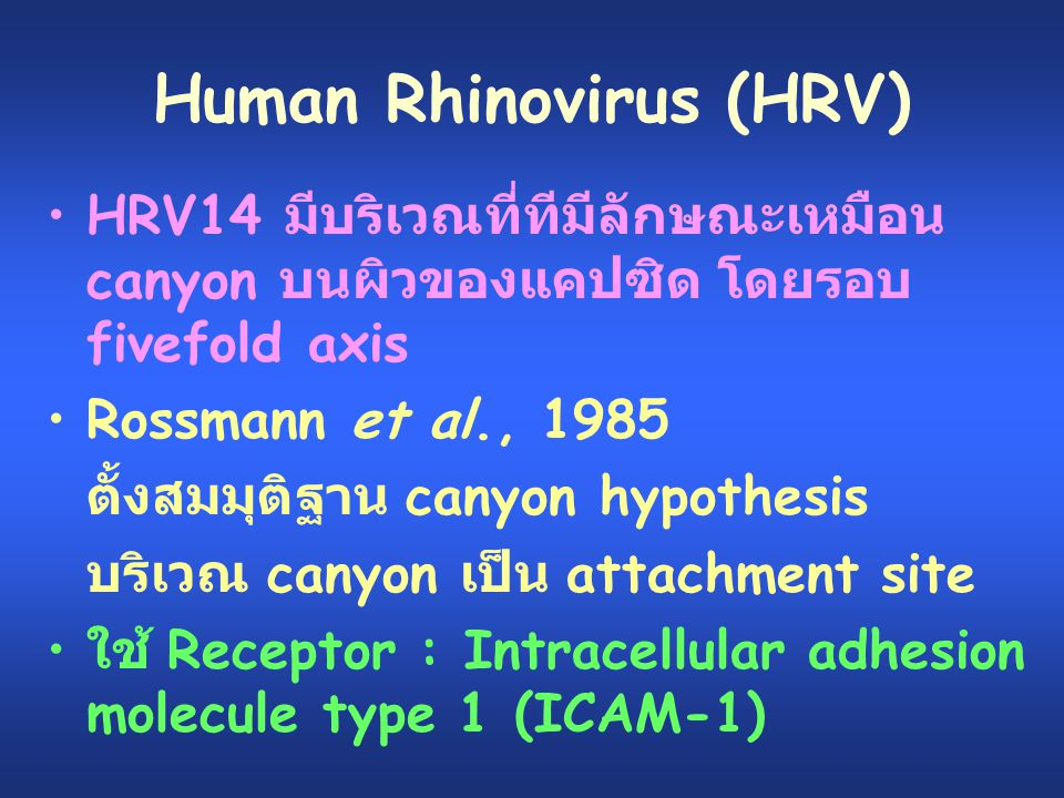 Human Rhinovirus (HRV)
