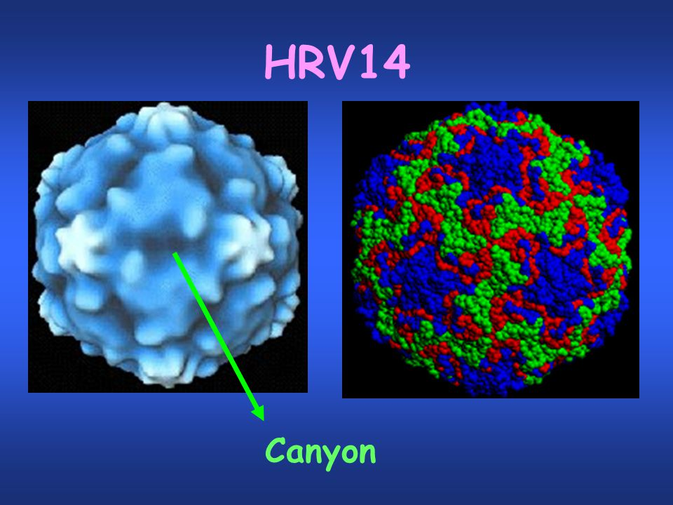 HRV14 Canyon
