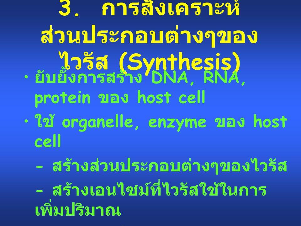 3. การสังเคราะห์ส่วนประกอบต่างๆของไวรัส (Synthesis)