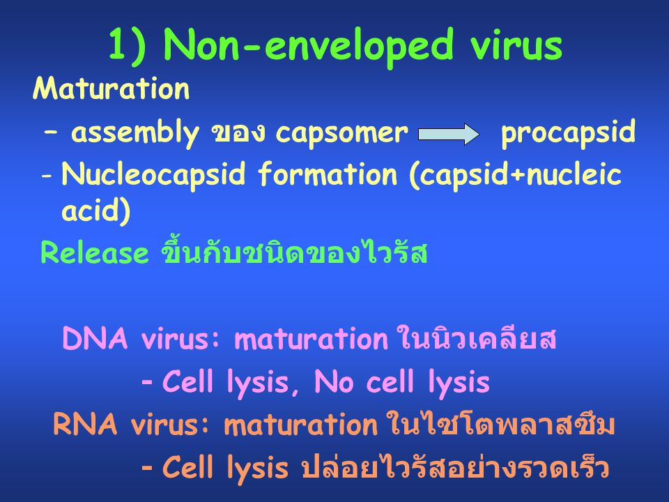 1) Non-enveloped virus Maturation – assembly ของ capsomer procapsid