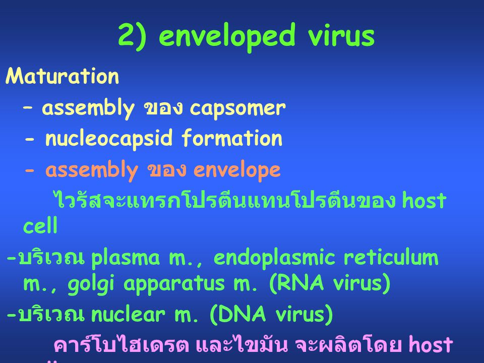 2) enveloped virus Maturation – assembly ของ capsomer