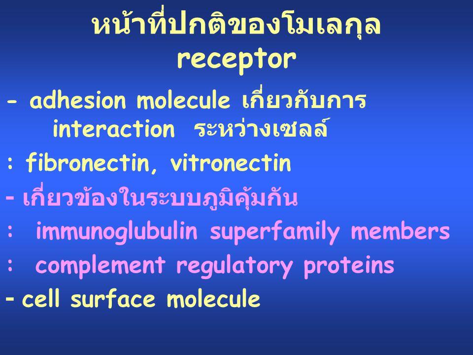 หน้าที่ปกติของโมเลกุล receptor