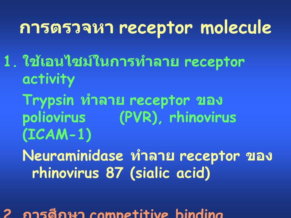 การตรวจหา receptor molecule