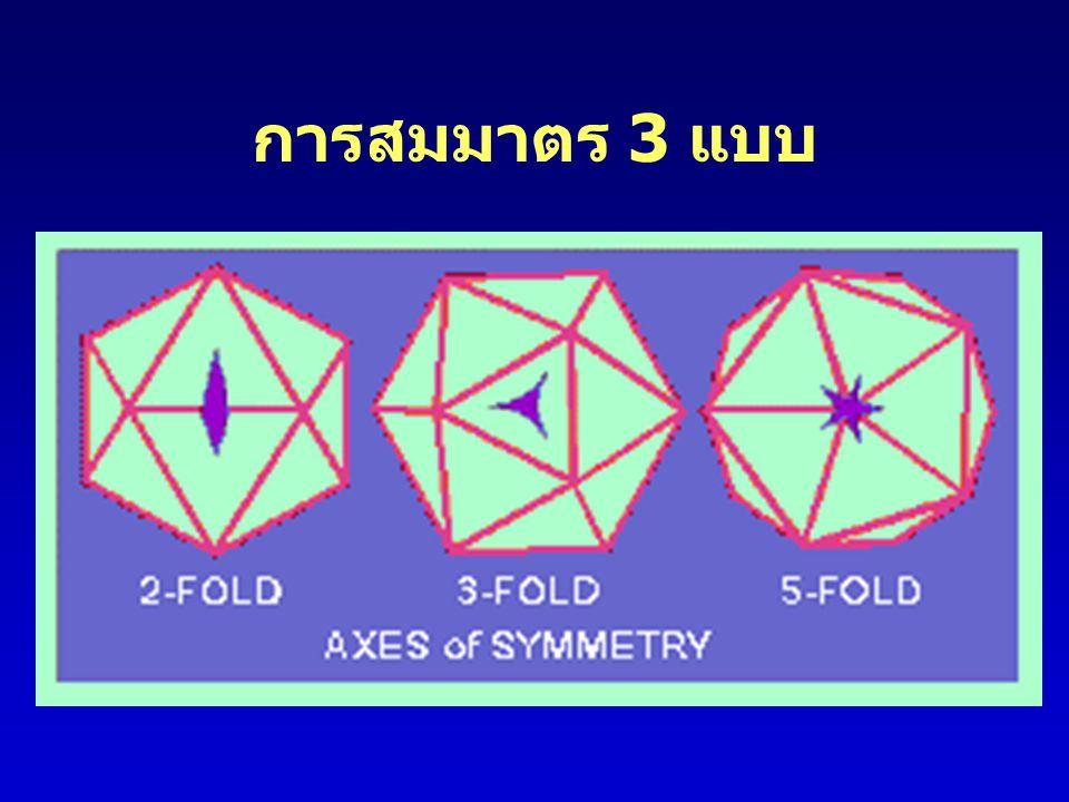 การสมมาตร 3 แบบ