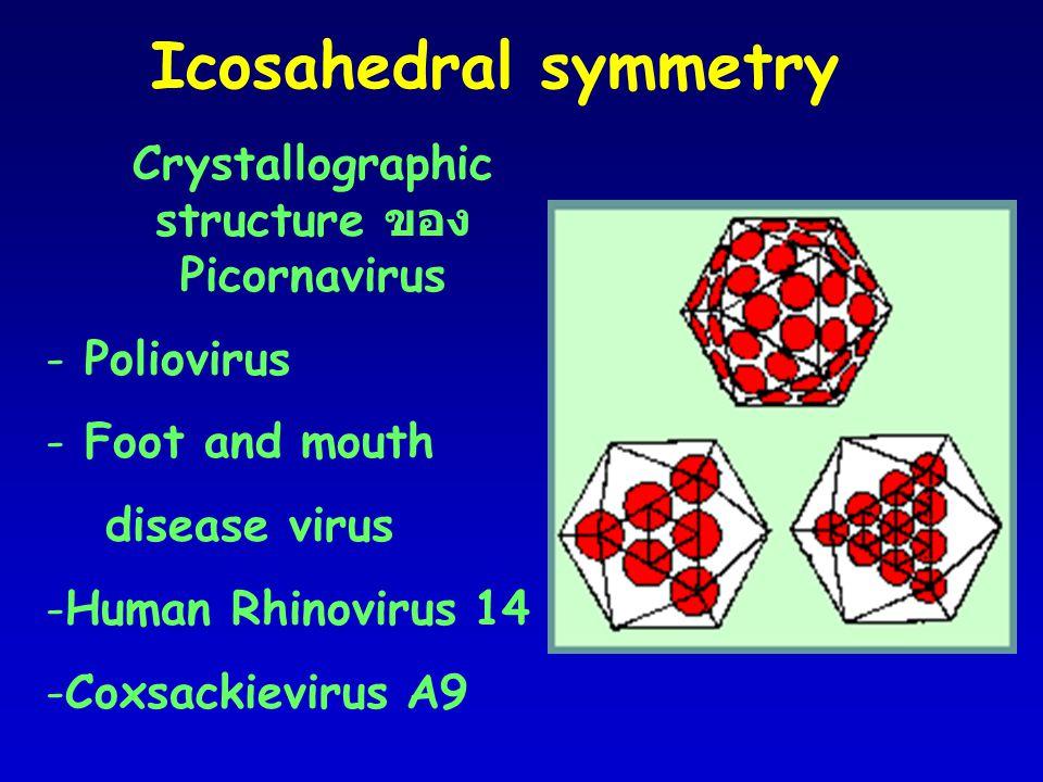 Crystallographic structure ของ Picornavirus